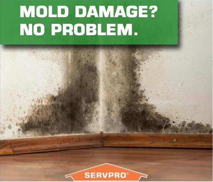 Mold Remediation Conditions In San Antonio, Texas  Might Be Right For Mold