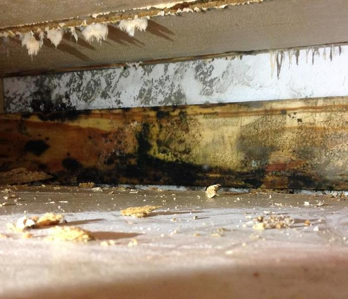 Mold Remediation Bexar County Residents:  Follow These Mold Safety Tips If You Suspect Mold
