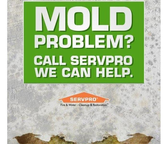 Mold Remediation Does Your Home in San Antonio, Texas Have A Mold Problem?