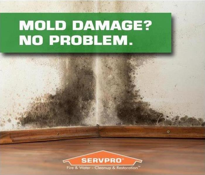 Mold Remediation The Mold Process