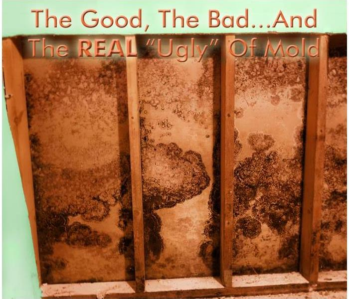 While mold can have some very positive outcomes in a variety of applications, it's NEVER a good thing in your home or office!